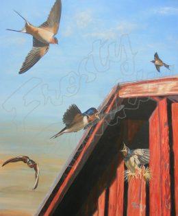Great Barn Swallow Battle