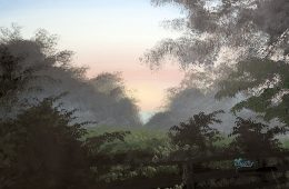 Catesby's Misty