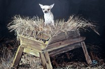 Dog In A Manger