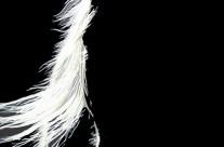 Equine Angel