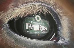 Insight of Paris