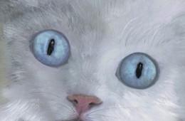 Kitty Bleu