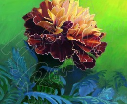 Painted Marigold