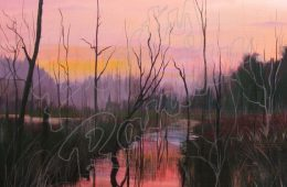Sunset in the Swamp