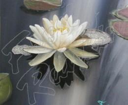 White Lily Dusk
